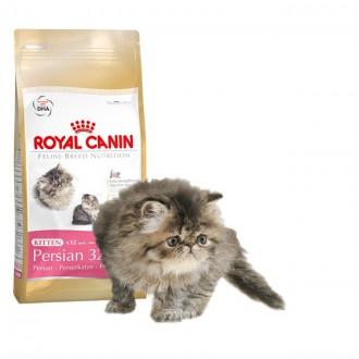 kitten-persian-32-royal-canin1
