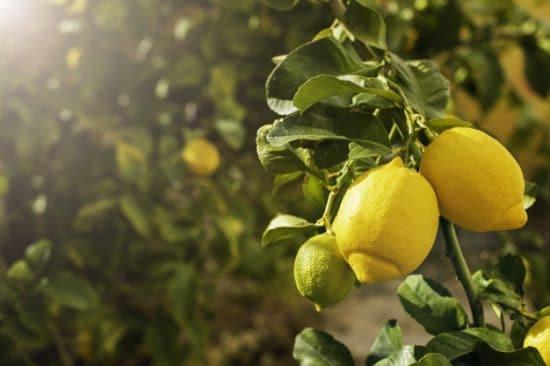 citron nettoyant universel maison